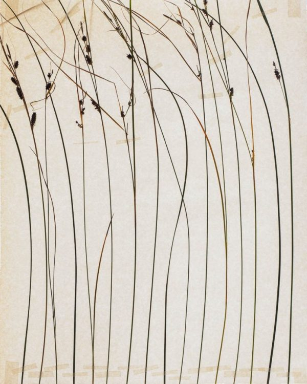 reconstructed nature limited edition print