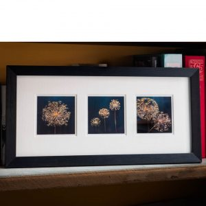 set of 3 allium seedhead prints