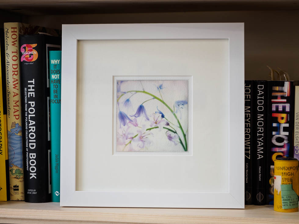 bluebells framed fine art print