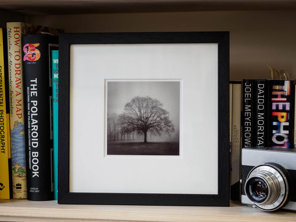 winter tree pitchcroft fine art print