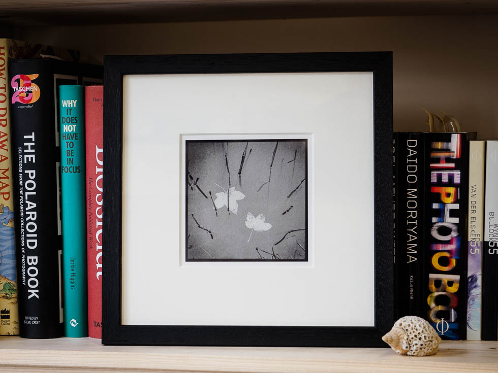 floating leaves framed fine art print