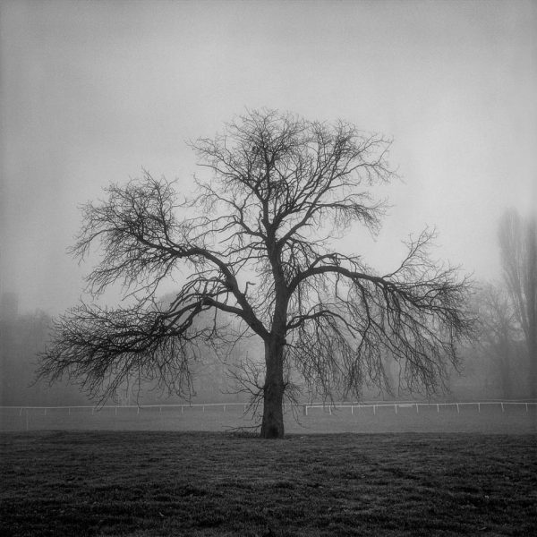 winter trees by Richard Nicholls fine art photography