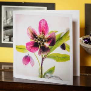 christmas rose greetings card